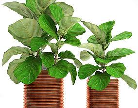 Ficus Lyrata Trees 3D model pot
