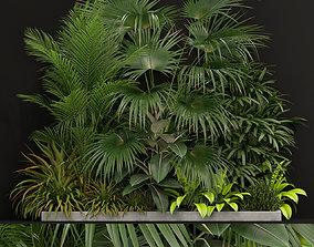 Plants collection 197 3D model