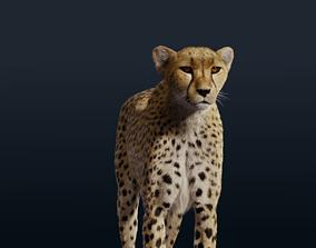 Cheetah Fur nature 3D
