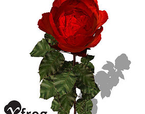 XfrogPlants Rose 3D model