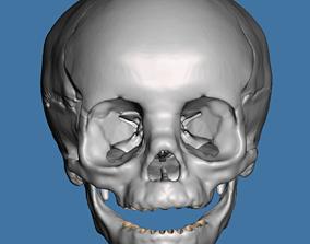 Human child skull anatomy model no teeth