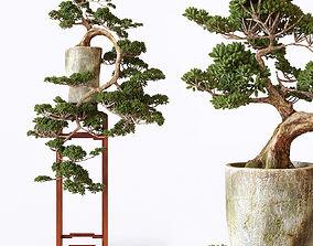 3D bonsai 01