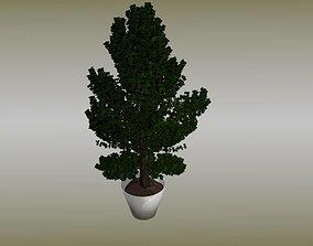 Plant in vase 3D asset