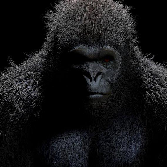 Gorilla Rigged Hair Fur