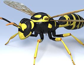 3D model paper wasp