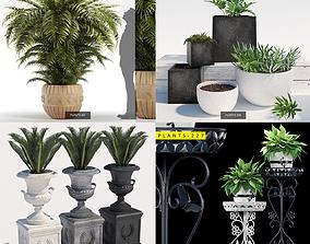 3D model PLANTS COLLECTION 1