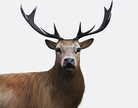 The Forest Deer 3D asset
