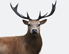 3D model The Forest Deer