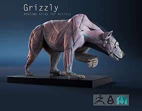 Digital Grizlly anatomy Atlas for Artists 3D model
