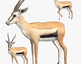 Gazelle 3D asset rigged