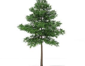 Scots Pine Tree Pinus sylvestris 9m 3D
