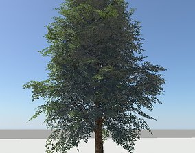 Trees Pack 3D model animated VR / AR ready