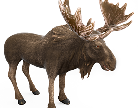 Moose cartoon 3D model