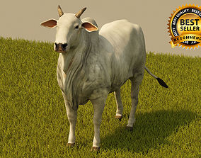 Cattle 3D model