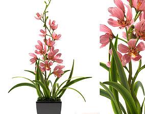 3D model Orchid flowerd plant