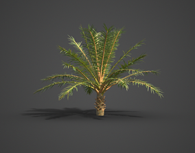 2021 PBR Silver Date Palm Collection - Phoenix 3D model