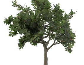 Fig tree fruit 3D