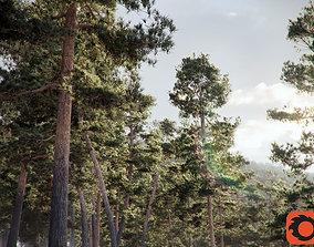 Pinus Syluestriformis Pack of 12 Pines 3Ds MAX Corona