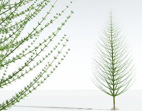 EVERYPlant Spiral Horsetail Tree 02 --12 Models--