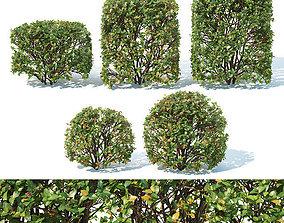 3D Cotoneaster lucidus Nr 5- Ten transparent cubes - 1