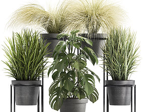Collection of Exotic Plants plant 3D model