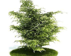 Ornamental Tree In Yard 3D model
