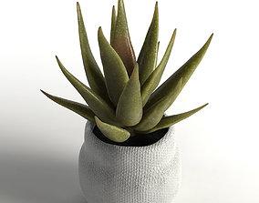 faux aloe plant 3D model