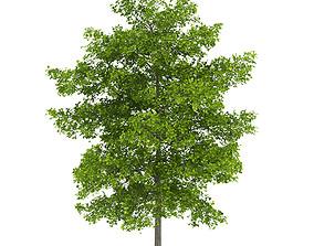 3D Common Lime 8M