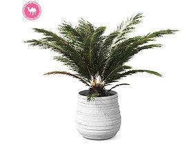 Palm Boho 3D model