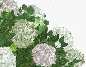 Bush Hydrangea arborescens 3D model