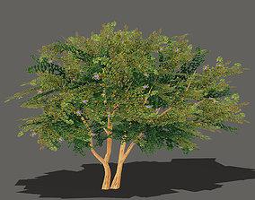 Cartoon Tree 3 3D asset