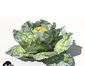 XfrogPlants Cabbage 3D model