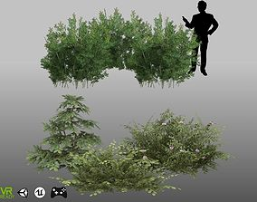3D asset Lycium Shawii and Flower Shrubs