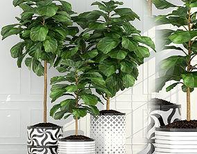 3D model Plants collection 63