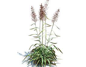 Frost Grass Plant 3D model