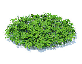 herb Grass with Plants 3D Model