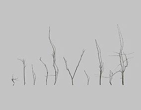 Mountain Ash Twigs 3D model