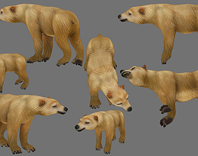3D asset rigged polar bear