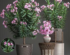 Collection Nerium oleander 3D model