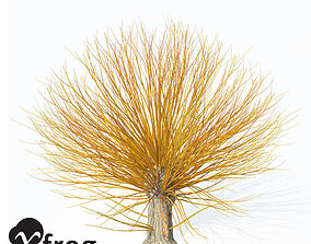 3D XfrogPlants Golden Willow