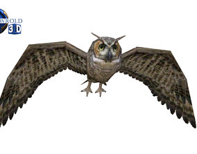 animated Owl rigged animated lowpoly 3d model