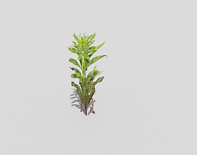 3D asset realtime forest Low poly Plant