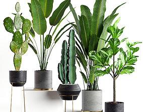 3D model Collection plants 05