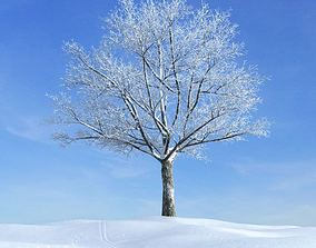 3D Snow Covered Tree In Winter