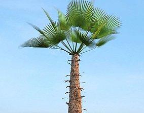 3D model Tropical Tree