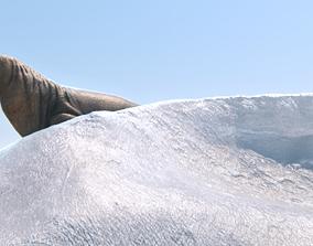 Walrus Morsa 3D model