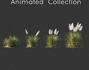 Cortaderia selloana wind animated collection 3D model