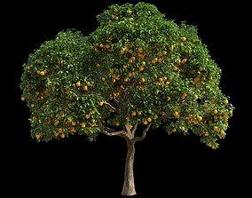 3D model Orange Tree 3 tree