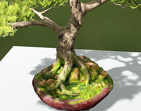 3D asset VR / AR ready PBR Bonsai Tree