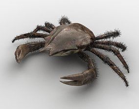 DECAPODA Crab 3D asset game-ready